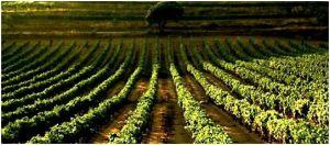 La route des vins en Espagne
